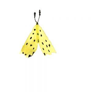 spot_moth